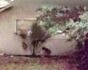 9807 Forest Hills Drive, Tampa image