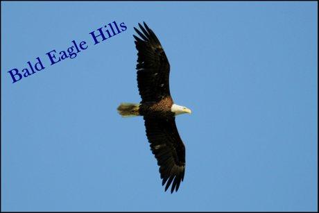 Bald Eagle Hills Real Estate Eagle Image