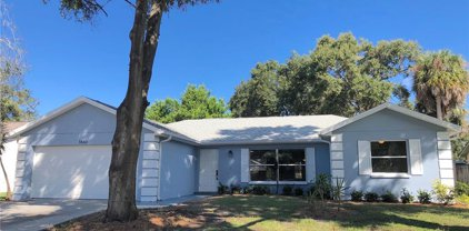 1860 Willow Oak Drive, Palm Harbor