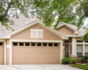10250 Shadow Branch Drive, Tampa image