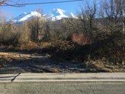Spruce, Mount Shasta image