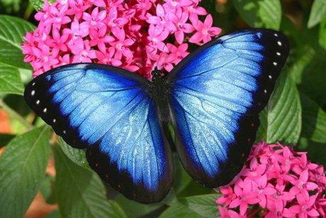 Coconut Creek Butterfly World