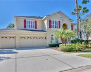 16174 Colchester Palms Drive, Tampa image